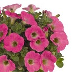 Potunia™ Plus Hot Pink